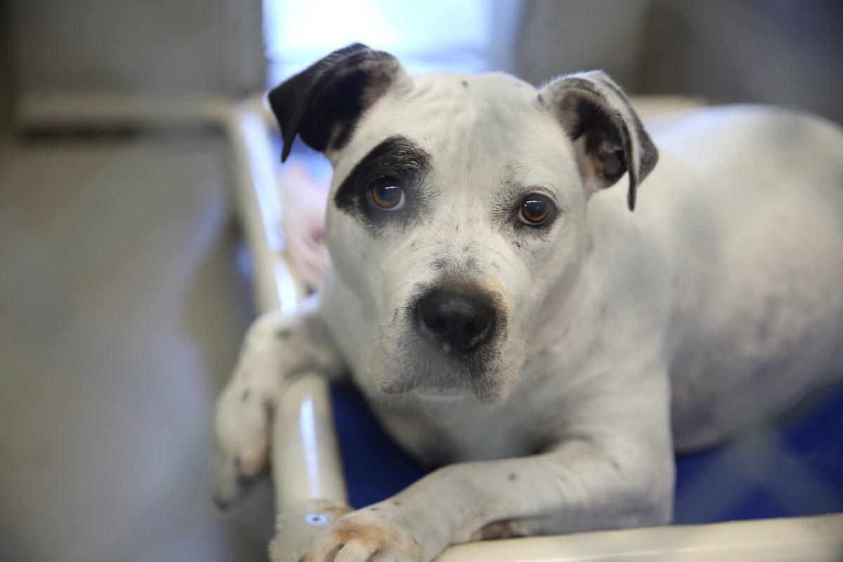 Animal Shelter - Public Health - Atlantic County Government