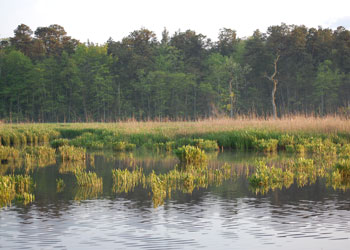 Wetland landscape at Estell Manor Park.