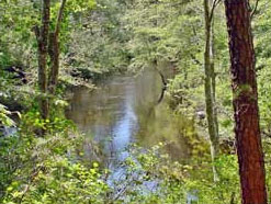 A Tributary of Lake Lenape with Forest Cover